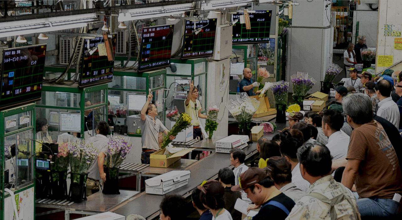東京都中央卸売市場 | 北足立市場 花き部 仲卸 | 株式会社オーダーフラワー